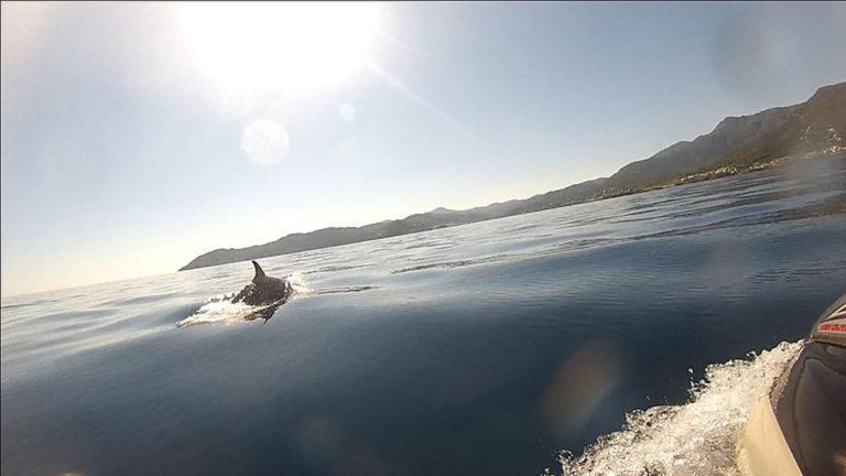 Jetski - Banyuls sur Mer