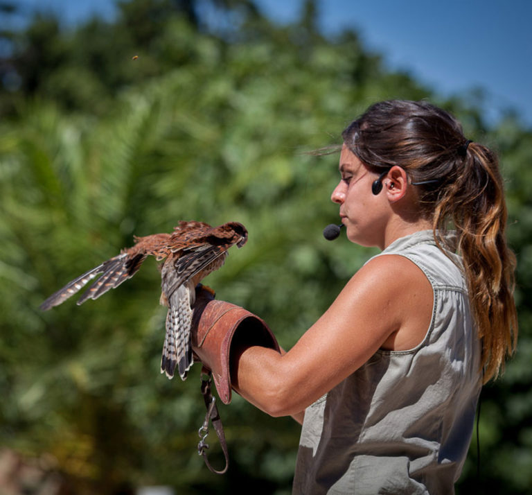 Les Aigles de Valmy à Argelès-sur-Mer