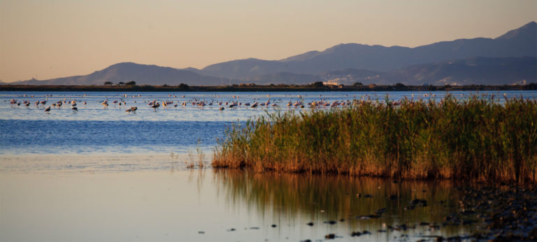The pink flamingos - the pond in Canet